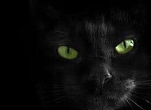 Почему черная кошка считается плохой приметой?