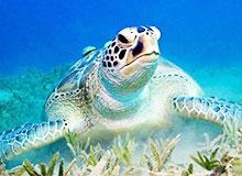 Почему плачут черепахи?