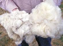 Как обрабатывают шерсть животных?