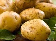 Как картофель появился в России?