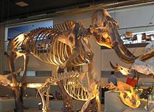 Почему исчезли доисторические животные?