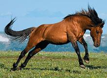 Сохранились ли в наше время дикие лошади?