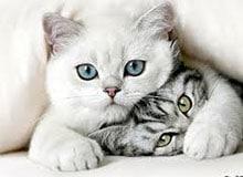 Почему кошки не такие общительные, как собаки?