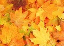 Почему листья меняют цвет осенью?