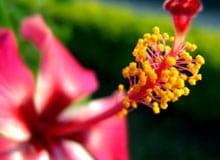 Почему у большинства растений образуются цветы?