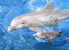 Какие бывают дельфины?