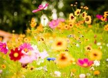 Почему цветы имеют запах и цвет?
