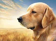 Когда были одомашнены собаки?
