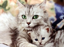 Когда были приручены кошки?