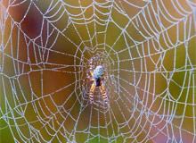 Почему пауки не попадают в свою паутину?