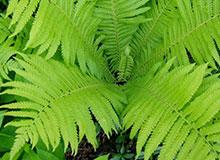 Когда на земле появились растения?
