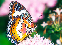 Могут ли бабочки чувствовать запах?
