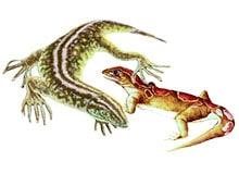 Когда появились первые рептилии?