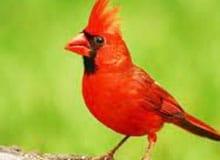Могут ли птицы чувствовать запах?
