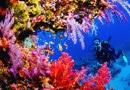 Какие бывают кораллы?