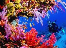 Какие бывают кораллы по цвету и структуре. Вы узнаете из чего сделаны кораллы.