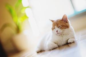 Прививка домашней кошке зачем если она не выходит на улицу.