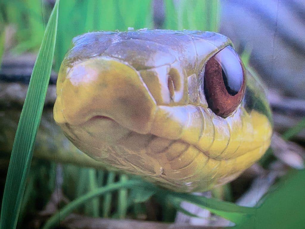 Взгляд змеи