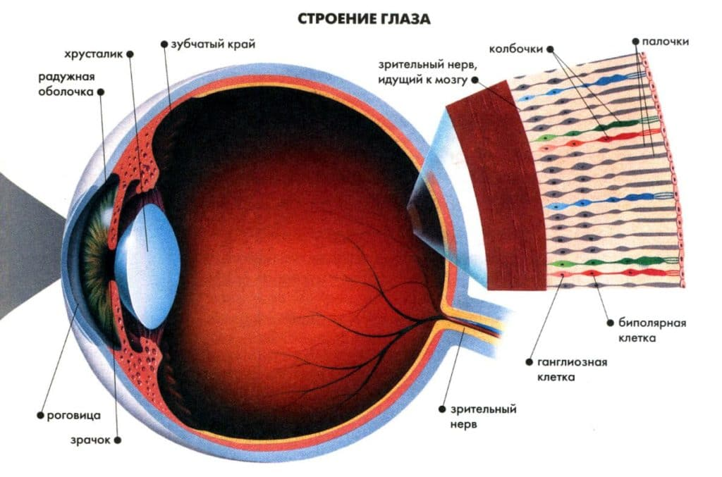 как глаз различает цвета
