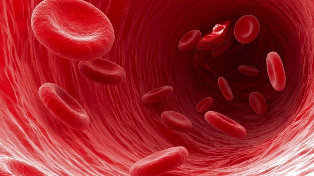 как циркулирует кровь