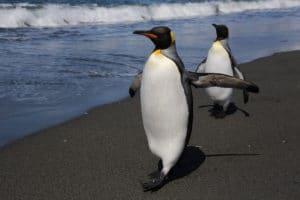 Пинвгины Антарктики