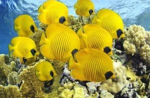 Рыбы Тихого океана