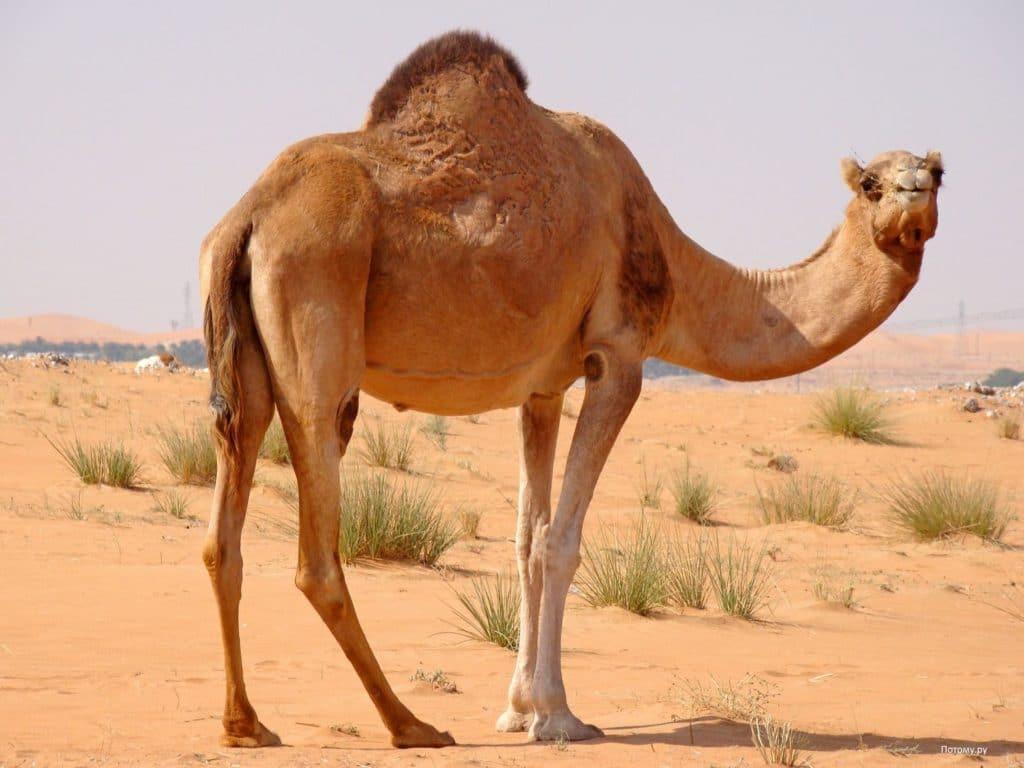 Как растениям и животным удается жить в пустыне?