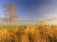 Осенние листья. Почему листья опадывают осенью.