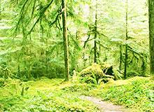 Что такое лесоводство?
