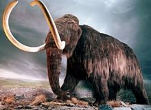 Откуда произошли слоны?