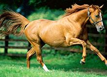 Кто первым приручил лошадь?