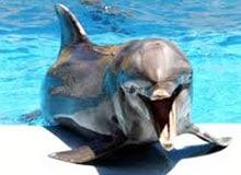 Относится ли дельфин к млекопитающим?