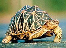 Какие бывают черепахи?