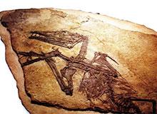 Являются ли предками птиц рептилии?