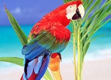 Откуда появились попугаи?