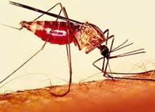 Что такое малярия?