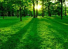 Влияет ли растительность на климат планеты?