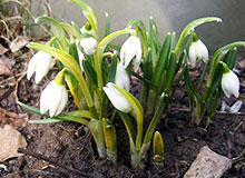 Откуда пришло слово «апрель»?