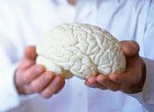 Как устроен человеческий мозг?