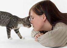 Кто лучше слышит: человек или кошка?