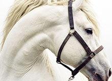 Что означает слово «лошадь»?