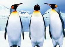 Может ли пингвин летать?