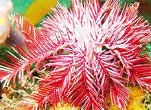 Морские лилии: животные или растения?