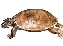 Какая черепаха самая крупная?