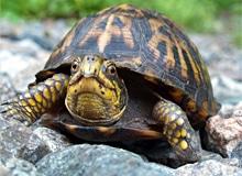 От кого произошли черепахи?