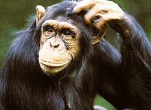 Можно ли обезьян научить покупать себе игрушки?
