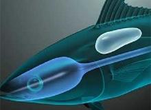 Зачем рыбам нужен плавательный пузырь?