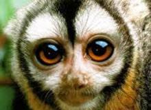 Видят ли обезьяны ночью?