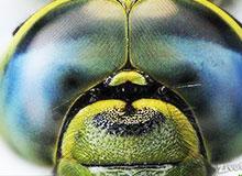 Как видит пчела?