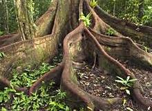 Почему у растений есть корни?